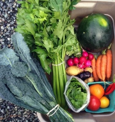 Ice Cap Organics CSA - Early Season Farm Box